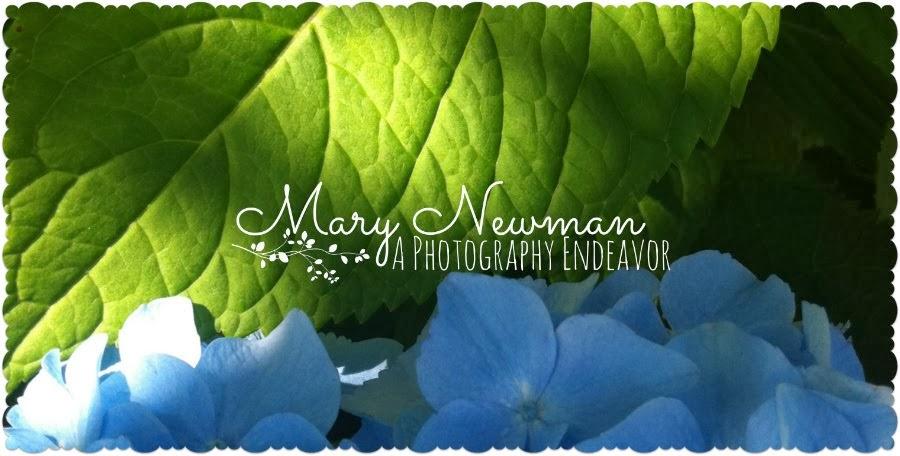A Photography Endeavor