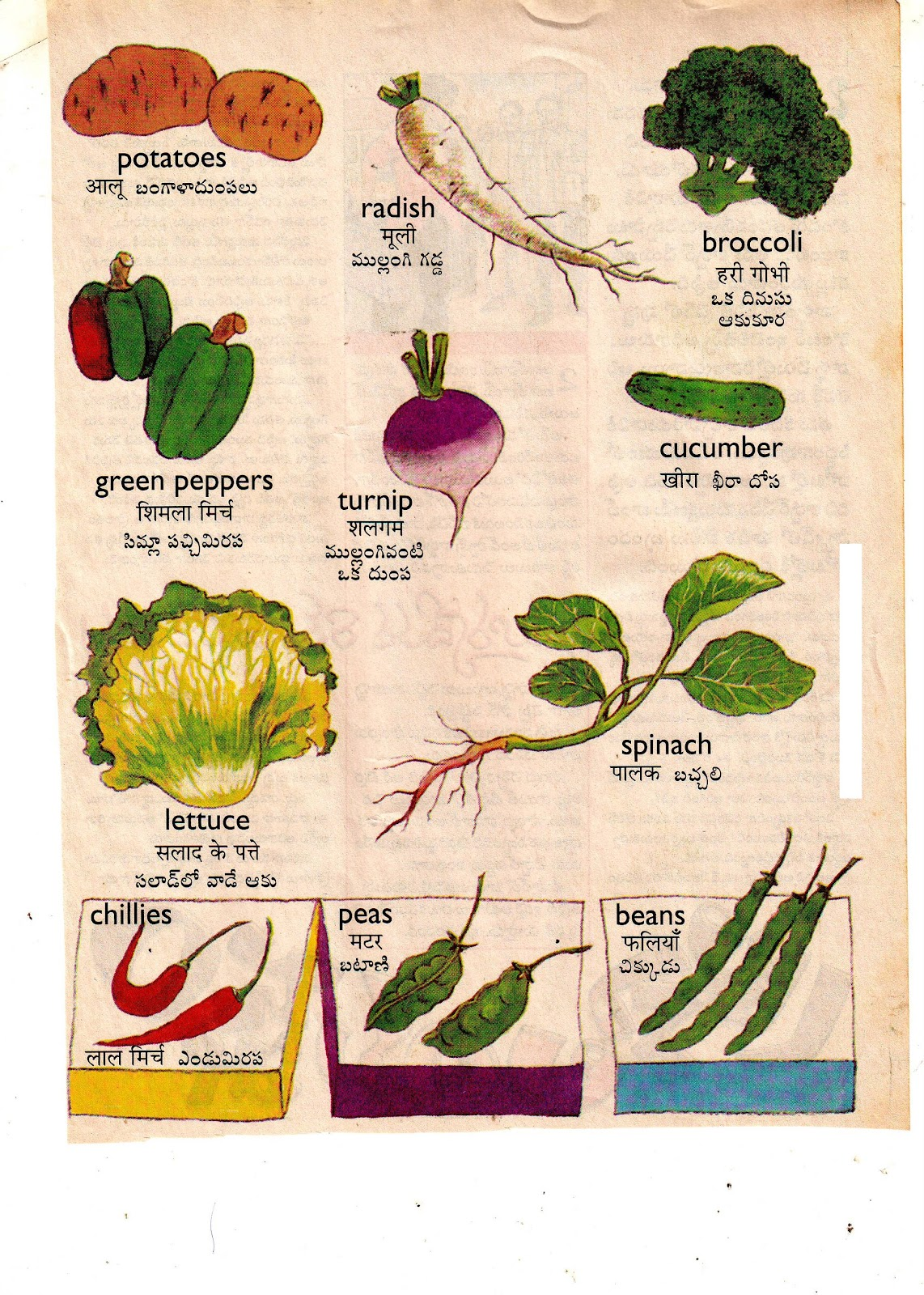 NIGHANTUVU = DICTIONARY: VEGETABLE NAMES WITH PICTURES