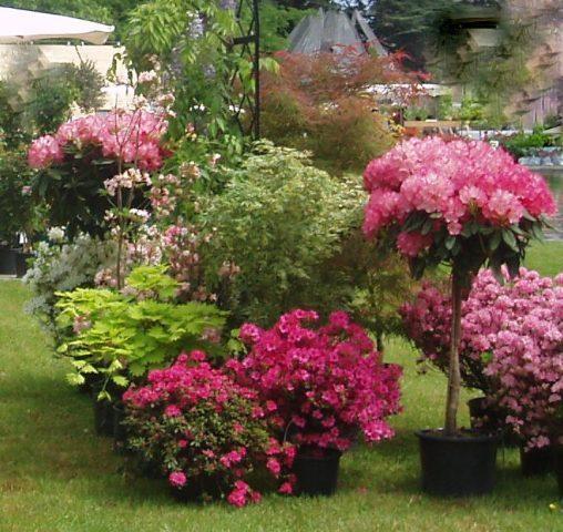 Flores de maceta macetas para tu casa - Flores de maceta ...