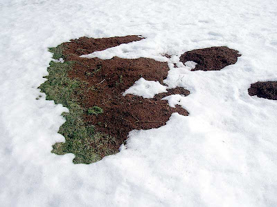 Look! That seems to be garden soil poking out from under the snow.