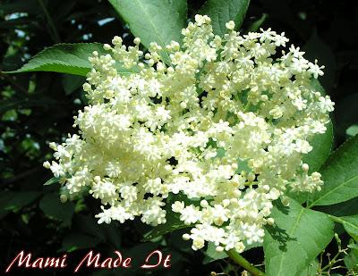 Elderflowers Syrup - Holunderblütensirup