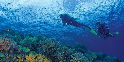 Plongée fantastique dans Wakatobi, diving in wakatobi, marine life