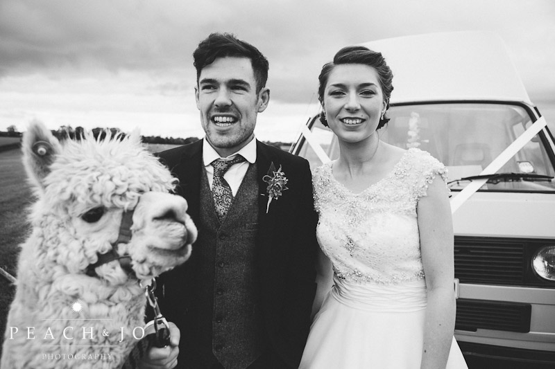 wedding portrait alpaca