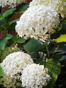 I fiori di Valma ^_^