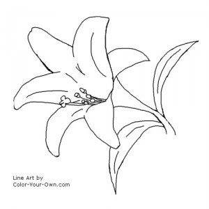 Lily Coloring Pages Free