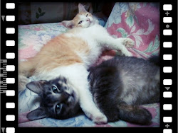 My Cats :3