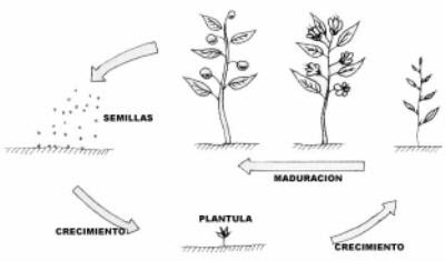 como nacen las planta: