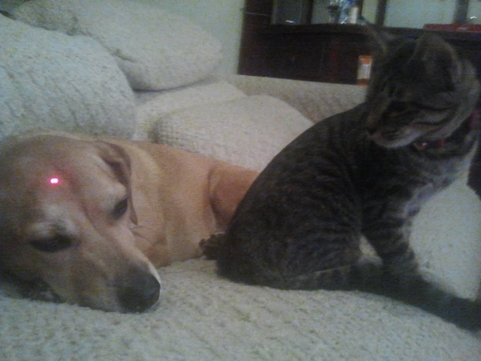 war in 3 2 1 funny cat and dog cat and dog picture