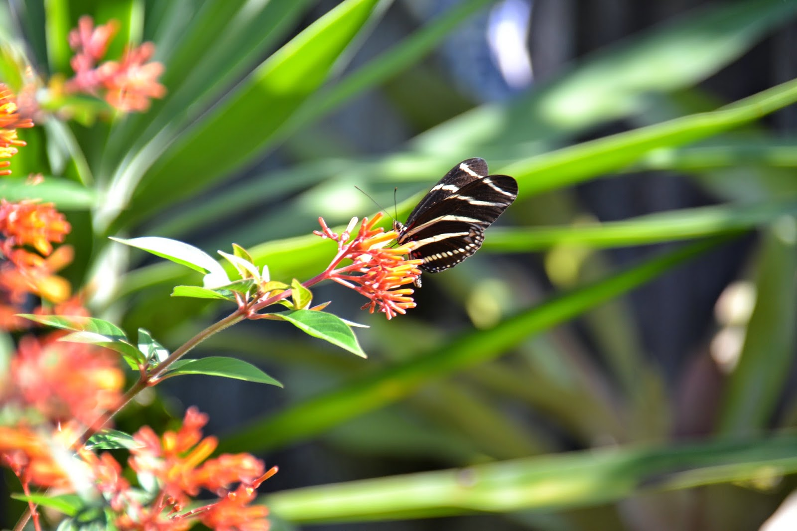 how to create a butterfly garden in south florida