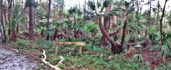 Cypress Swamp Trail im Calusa Nature Center & Planetarium Fort Myers Florida USA