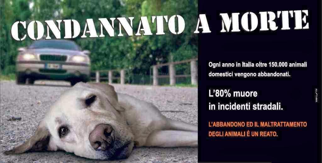 NO all'abbandono e/o maltrattamenti degli animali