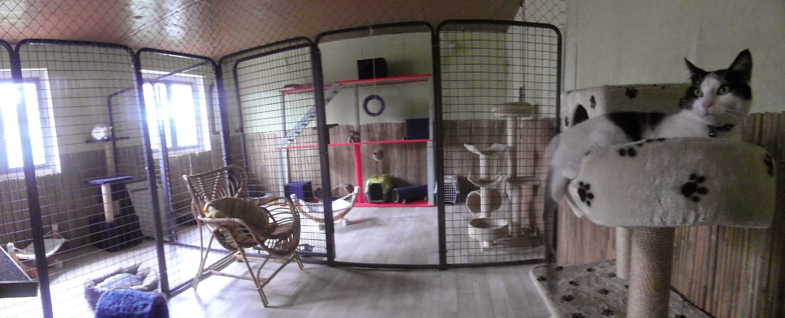 l 39 arche d 39 ely pension chat. Black Bedroom Furniture Sets. Home Design Ideas