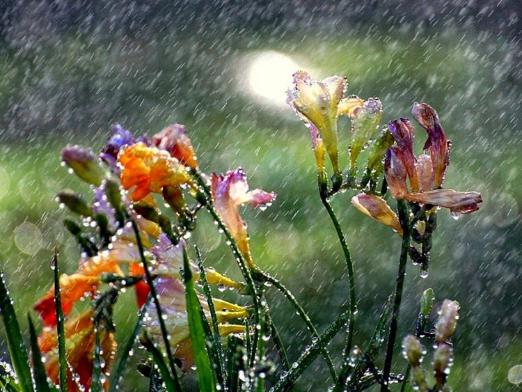 Colourful Flowers in Monsoon