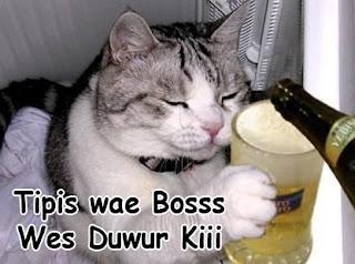 gambar meme kucing lucu