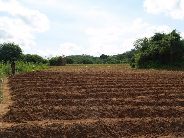 Campo para cultivar. Zambia