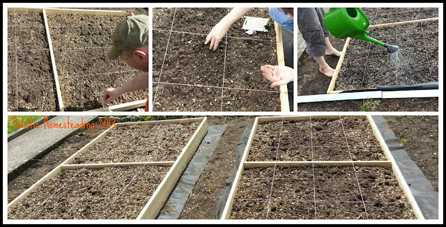 square foot garden planting