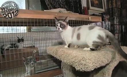 Fizz Girl - Kucing terpendek di dunia