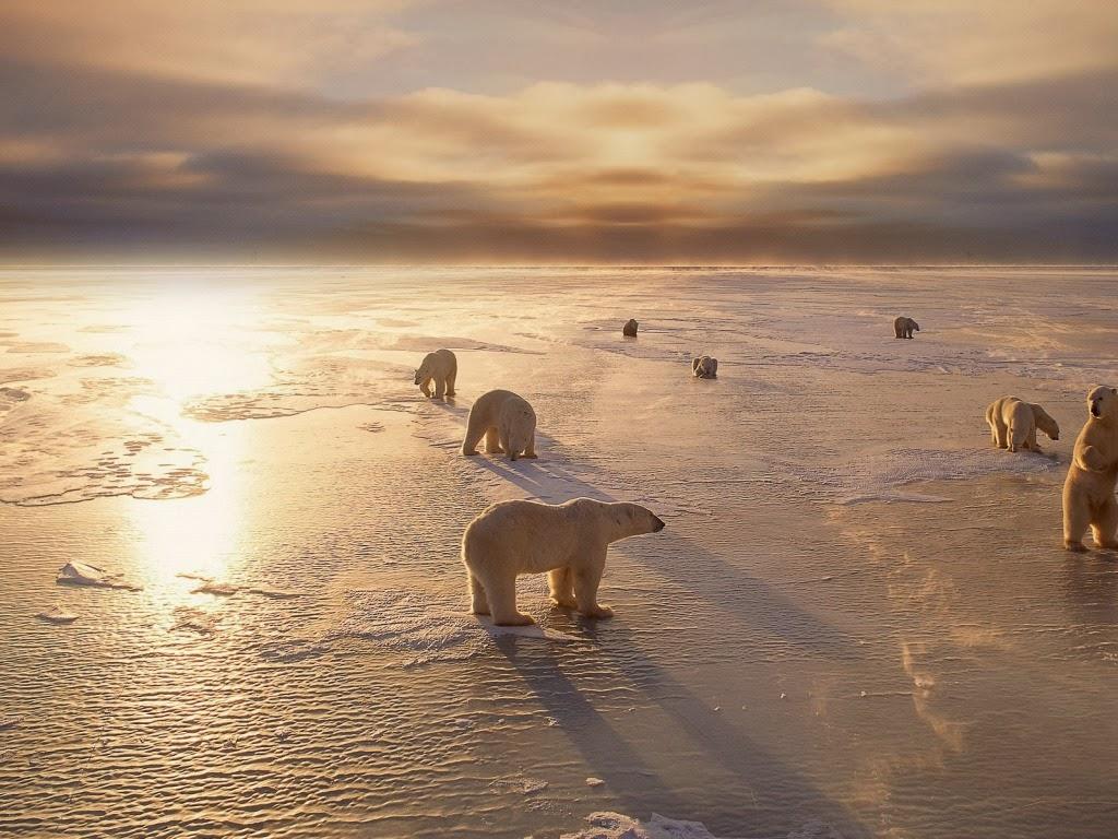 "<img src=""http://4.bp.blogspot.com/-4q1OlA4xfuY/UtuqNDI9N5I/AAAAAAAAI_s/RDletJxY09c/s1600/polar-bears.jpeg"" alt=""polar bear"" />"