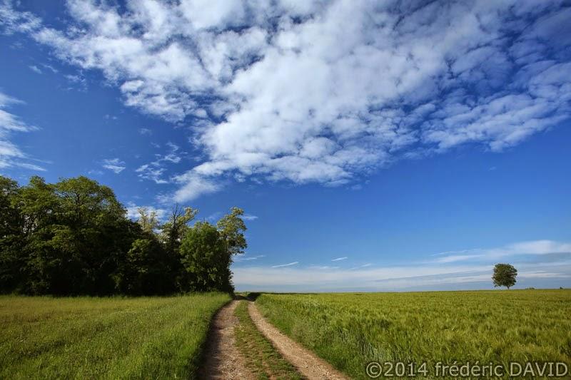 paysage campagne champ chemin arbre ciel nuages Seine-et-Marne