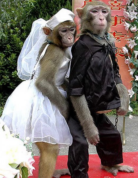 Cute Monkey Couple Pictures