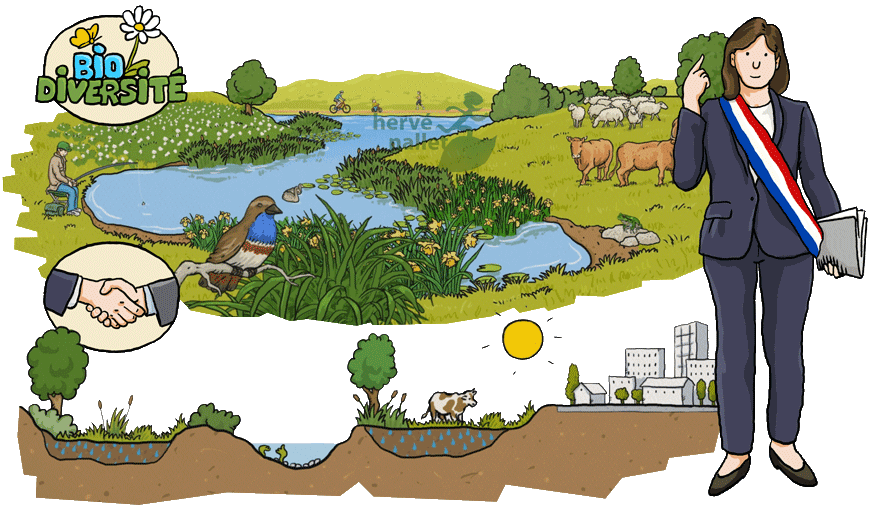 herv nallet graphisme et environnement dessins pour l 39 animation zones humides zones utiles. Black Bedroom Furniture Sets. Home Design Ideas