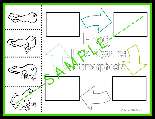 photo of: Frog Life Cycle Metamorphosis Worksheet