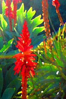 http://amy-vangsgard.artistwebsites.com/featured/rainbow-succulent-garden-amy-vangsgard.html