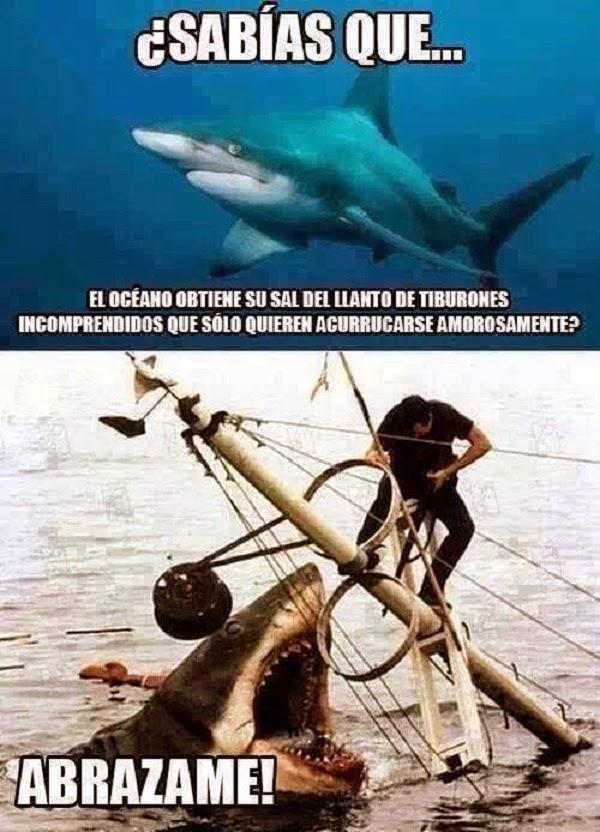 Pobres tiburones