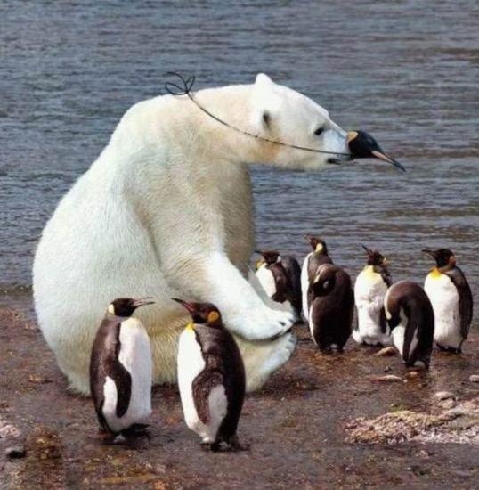 Imágenes de amor: La historia de los pinguinos