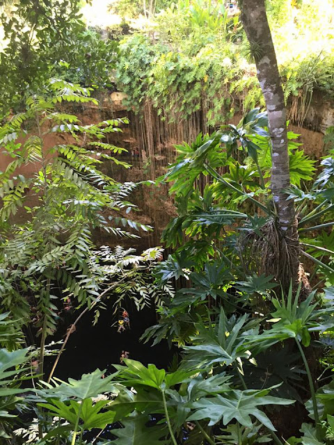 Cenote through foliage.