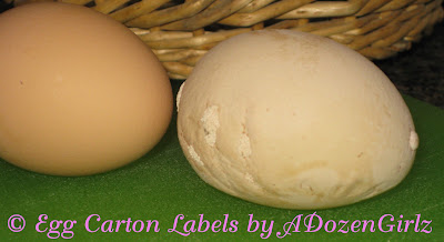 Funky eggshell from chicken explained.