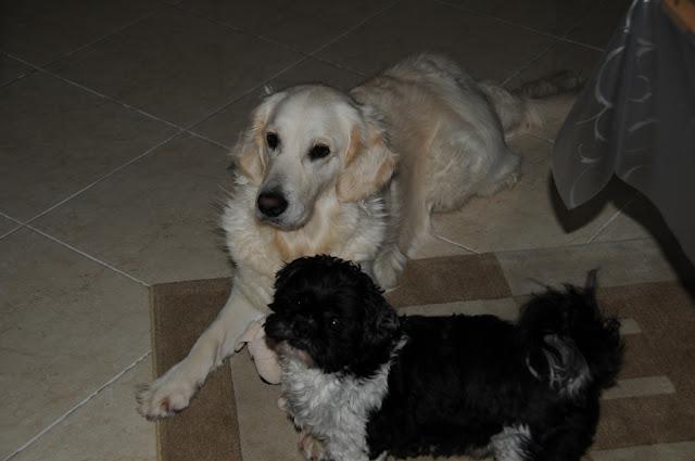 Tommie en Tessa