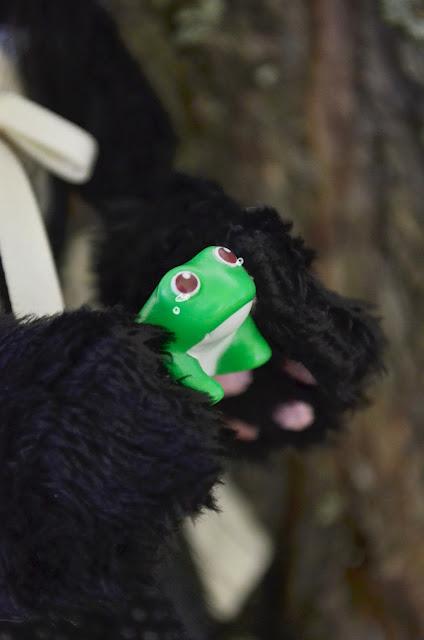 pyonta frog