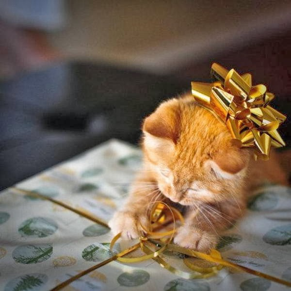 Funny cats - part 93 (40 pics + 10 gifs), kitten playing with ribbon