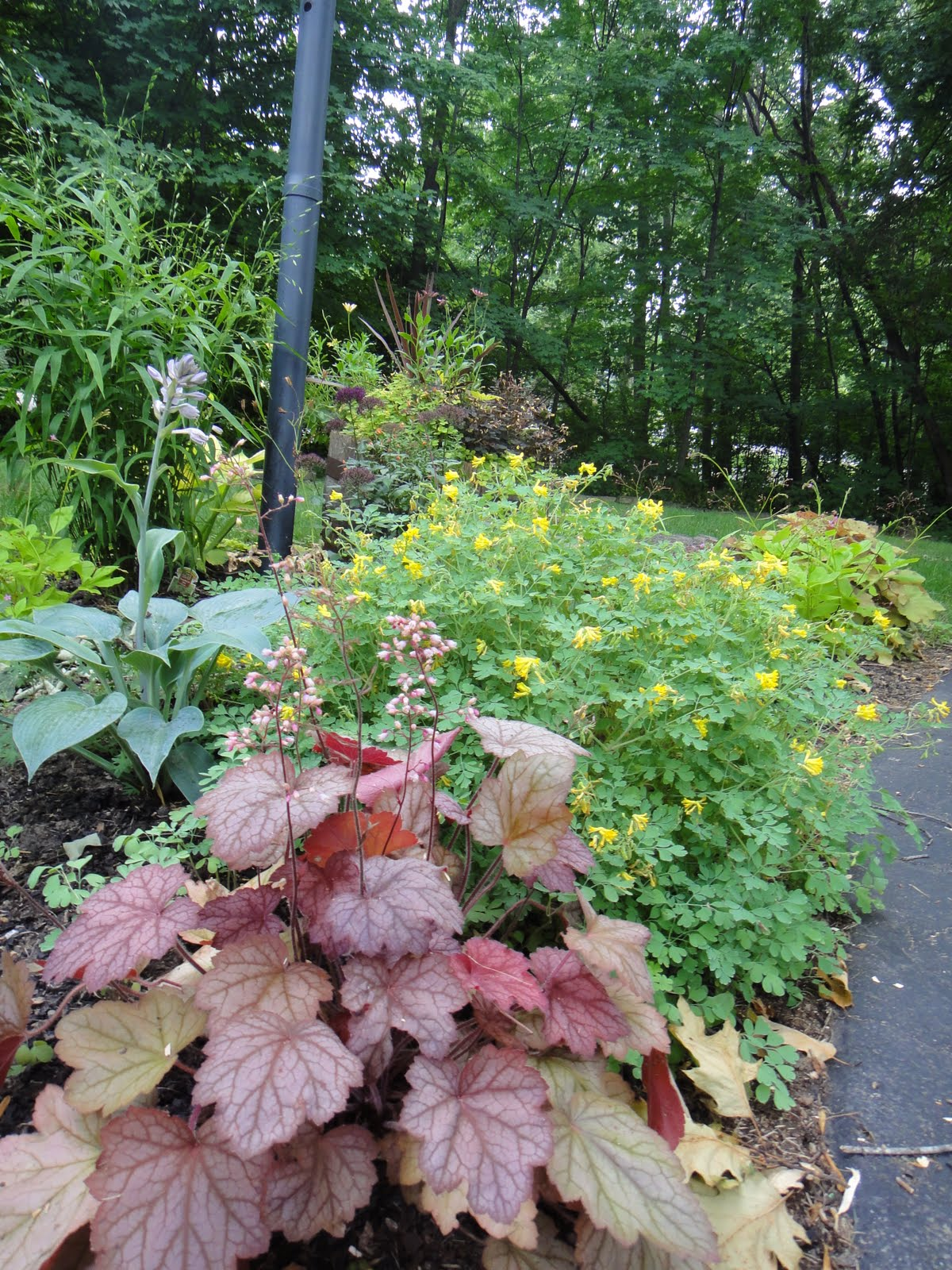 If Nothing Else, This Monthly Garden Bloggers Bloom Day Project Is Showing  Me That I May Have Gone Too Far Across The Spectrum From U201citu0027s All About  The ...