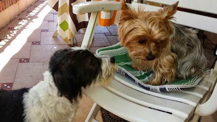 Mys Amigo: ZIRO & DARIO