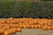 Bates Nut Farm Pumpkins