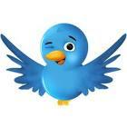 cara pasang animasi flying bird twitter
