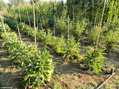 Καλλιέργεια καλοκαιρινών κηπευτικών