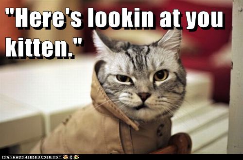 funny-cat-pictures-lolcats-catablanca.pn