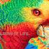 Turner y sus colores vivos que casi te comen