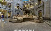 Μουσείο Φυσικής Ιστορίας