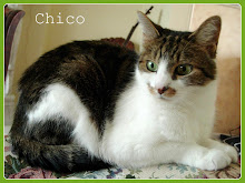 Chico Boy, we miss you!