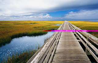 Experience Cape Cod Boardwalks