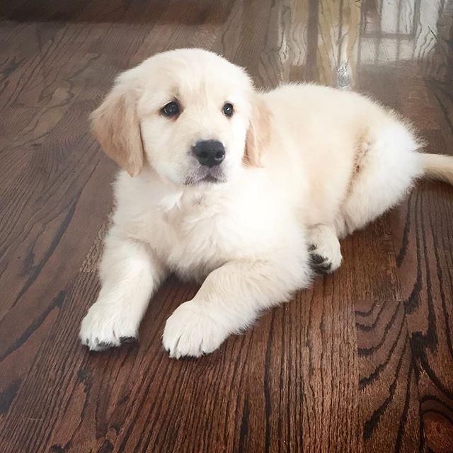 Maison de Cinq blog new puppy