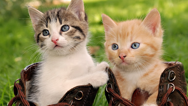 Cute Cat Brothers Outside Wallpaper