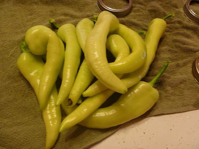 ... +Trail%2C+garden%2C+carrots%2C+banana+bars%2C+banana+pepper+033.jpg