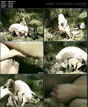 03.04.12 / ВИДЕО: pigmovie (19 MB)