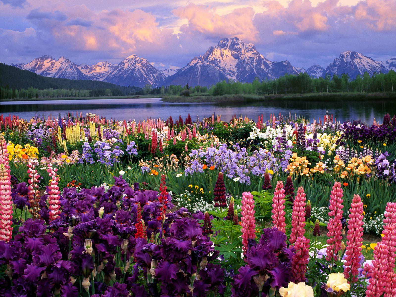 Vivir como las flores ( cuento con moraleja).... Paisajes-silvestres-flores