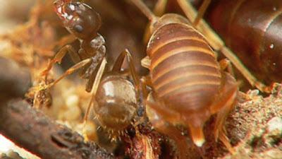 Semut Jadi Terdakwa